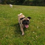 Dog Walking St Austell Paws & More