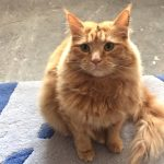Paws & More St Austell Cat Visits